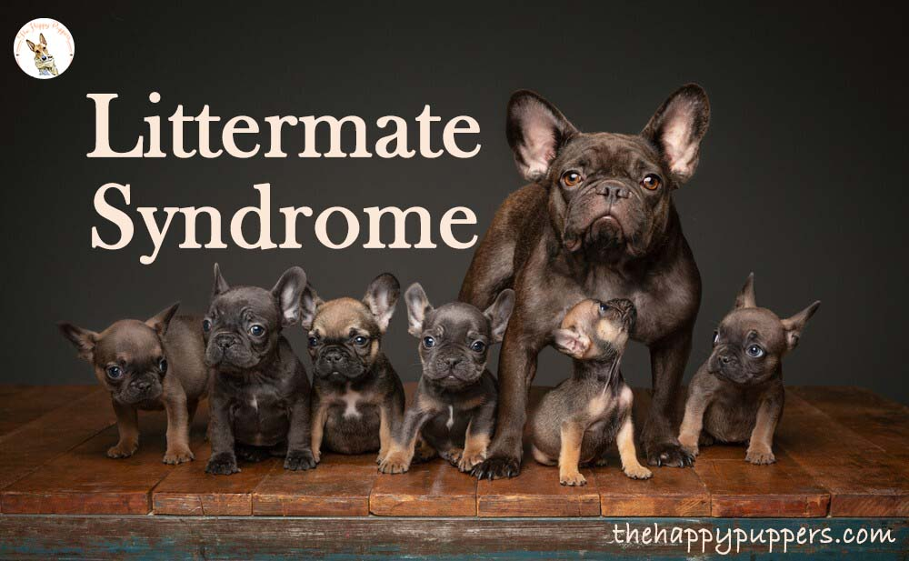 Littermate syndrome in dogs