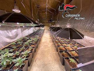 Partinico, coltivava marijuana e percepiva anche il reddito di cittadinanza, arrestato 58enne