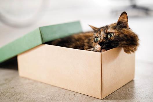 10 rzeczy, które sprawiają kotom przyjemność