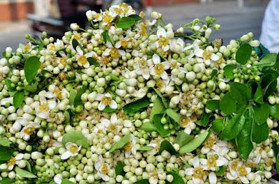 Những chùm hoa bưởi với hương thơm ngát