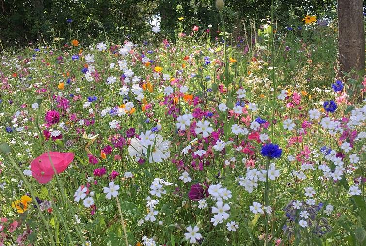 Bunte Blumenwiese statt Rasen mähen