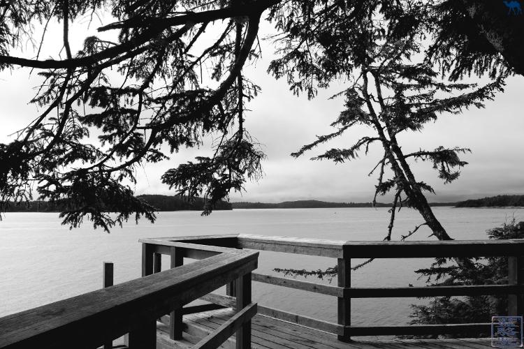 Le Chameau Bleu - Blog Voyage Tofino Canada -Randonnée Tonquin Trail Tofino Ile de Vancouver