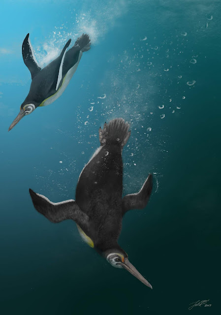 When penguins ruled after dinosaurs died