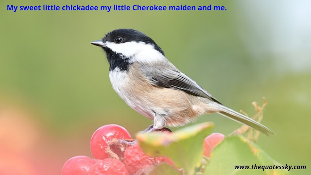 100 + Black-Capped Chickadee Bird Quotes & Sayings [ 2021 ]