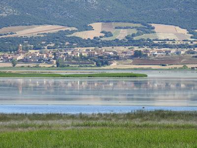 Laguna de Gallocanta verano de 2020