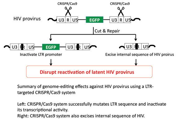 CRISPR/Cas9 VIH