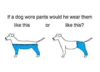 dog,pants