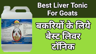 Best Liver Tonic For Goat And Poultry.