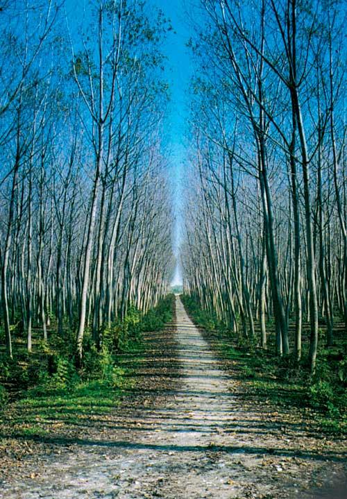 Δάσος Κοτζά Ορμάν: Η τελευταία ζούγκλα της Ευρώπης είναι στην Ξάνθη