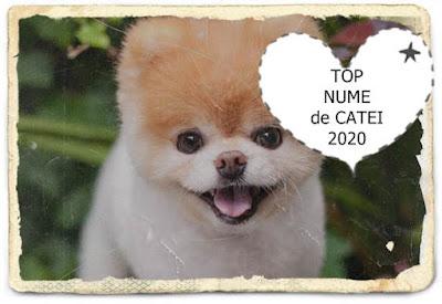lista top nume frumoase de caine fata in ordine alfabetica