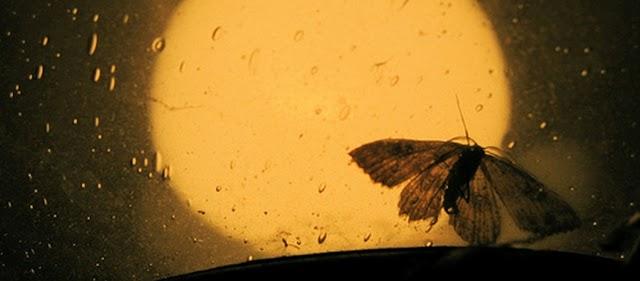 Γιατί τα έντομα πάνε στο φως;