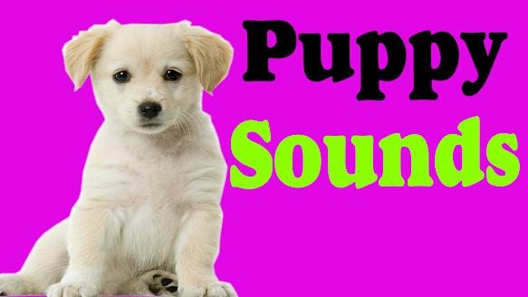Puppy Dog Barking Sound Effect