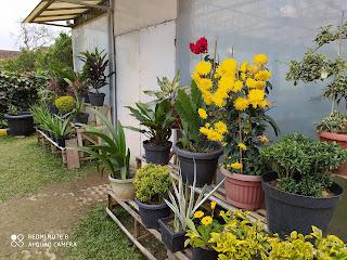 Taman Bunga Bee Park Majalengka