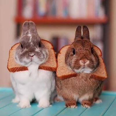 Rabbit Toast