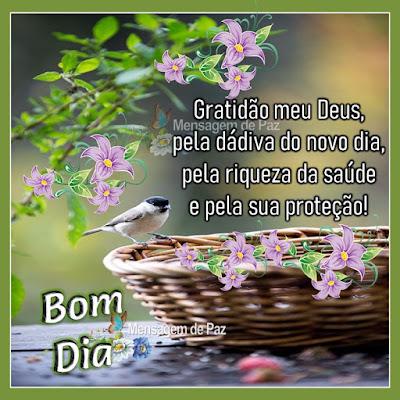 Gratidão meu Deus, pela dádiva do novo dia, pela riqueza da saúde e pela sua proteção! Bom Dia!