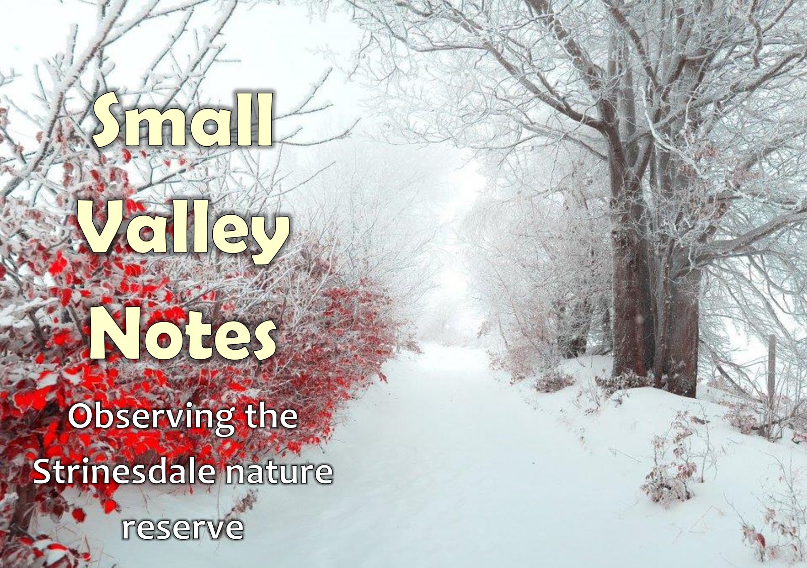 Small Valley Notes