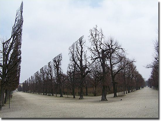 Imagens tão absurdas que parecem mentira - Árvores Simétricas