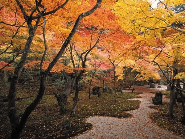 วัดโคเมียวเซ็นจิ (Komyozenji Temple: 光明善寺) @ www.kyushuandtokyo.org