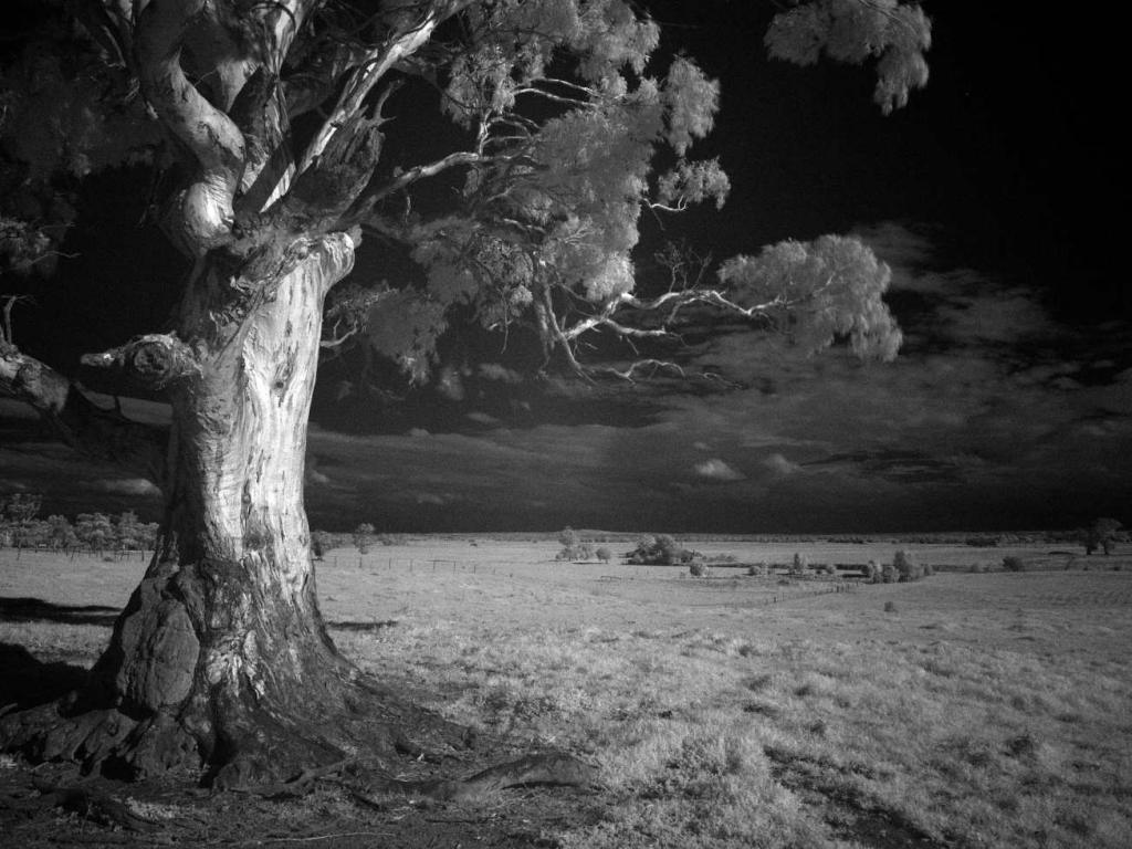 Trend digital infrared photography