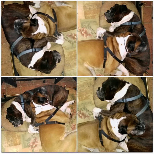collage, sleeping hugging boxers