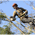 Arborists Of England: The Perfect Tree Rescuers
