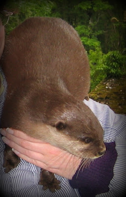 Belinda the Otter