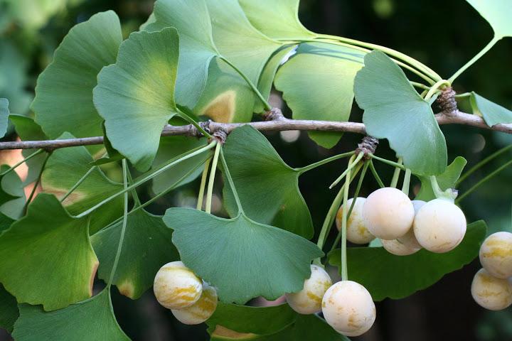 Obat Herbal Mata Kabur