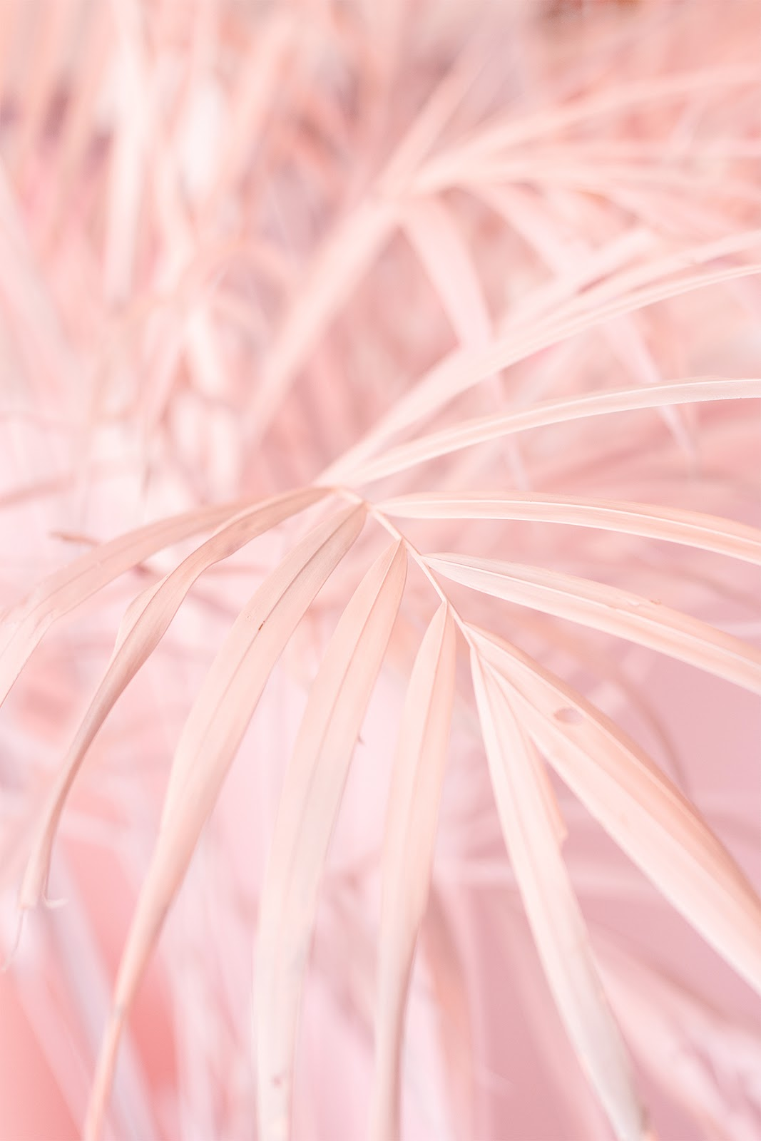 museum of ice cream party palmeira folha rosa blog do math pink palm leaves