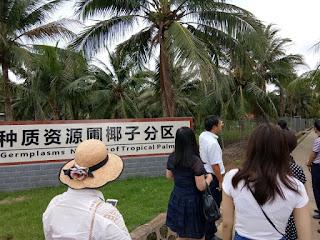kebun kelapa di kota  hainan provinsi haikou