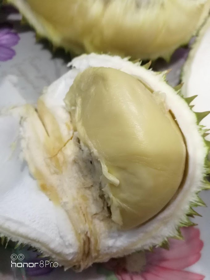 Makan Durian IOI