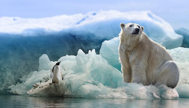 beruang kutub dan penguin