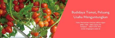 tomat marta, jual benih tonat terbaik, benih cap panah merah, budidaya tomat, toko pertanian, toko online, lmga agro