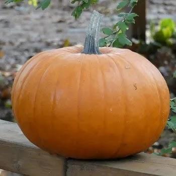भोपळा, pumpkin vegetables name in Marathi