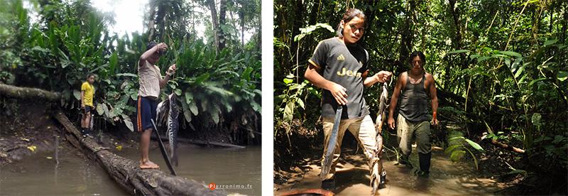 pêche à la nivrée, torche tigre, silure, Achuar