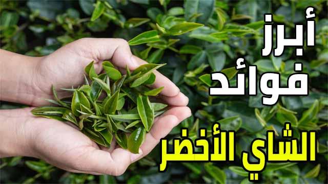 ما هي فوائد الشاي الاخضر للجسم والبشرة Green Tea