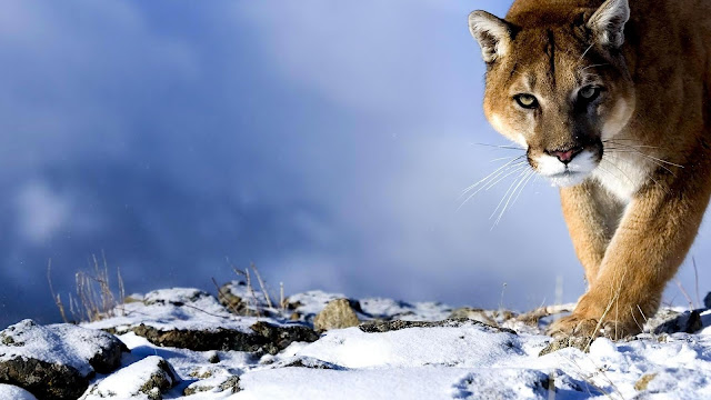 Beautiful animals wallpaper & backgrounds #3