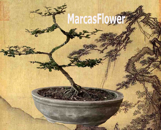 tanaman bunga mirten