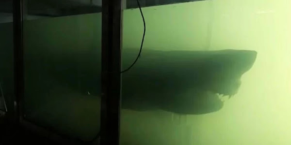 A espécie vive no meio do oceano e em regiões de águas costeiras