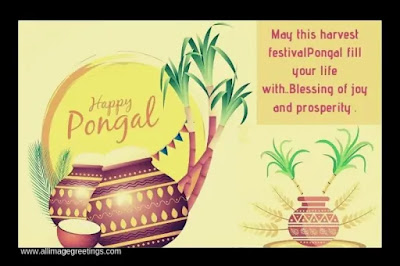 Pongal festival pictures image