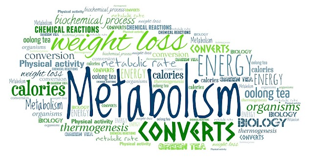 Your Metabolism And Its Effect On Fat Loss