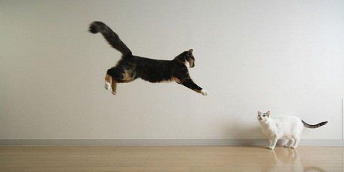 kucing yang sedang terbang menyerang