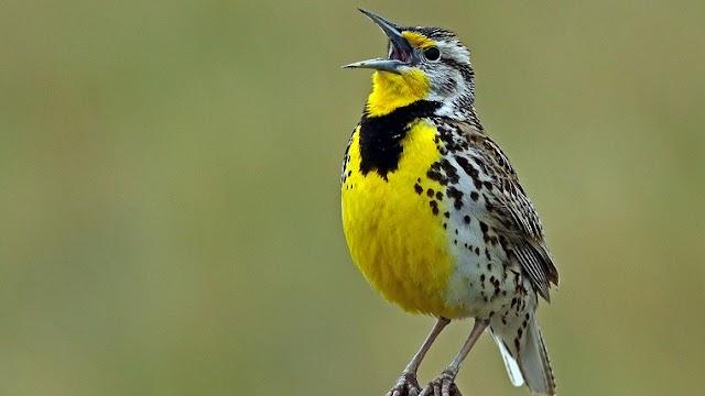 Big Data Study Finds More Than 50 Billion Wild Birds in the World