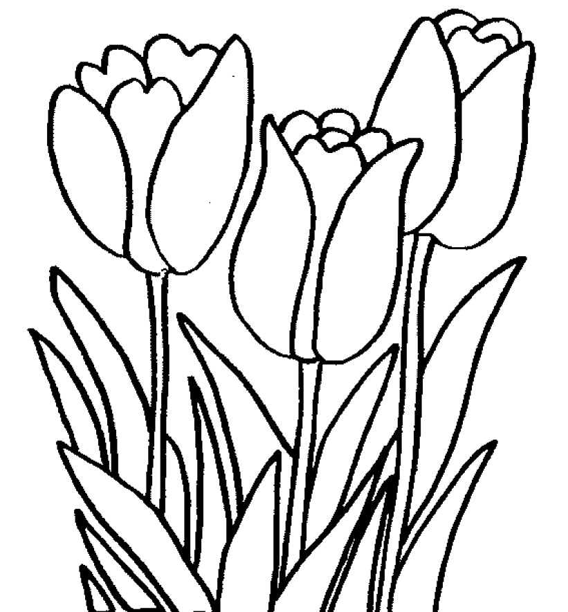 Mewarnai Bunga Tulip Collection Images