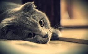 كلام حزين جدا , كلام حب حزين , صور حزينة
