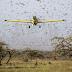 VÍDEO: Nuvem com 40 milhões de gafanhotos se aproxima do Brasil