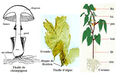 Biologie Végétale SVT S2