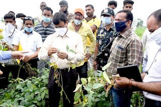 कलेक्टर श्री डॉड कृषि वैज्ञानिकों को साथ पहुंचे किसानो के खेतों में