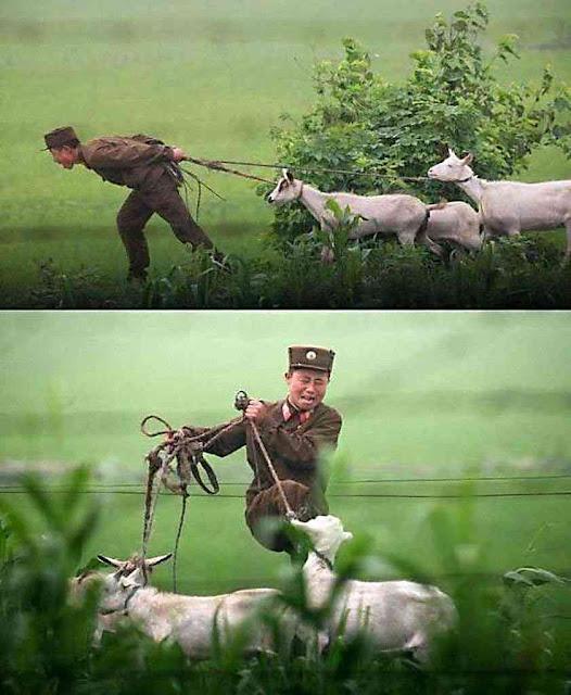 Soldados devem executar tarefas incompatíveis para agradar os chefes