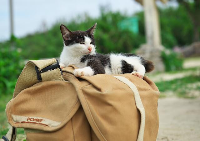 今年もドンケのバッグをベッド代わりにくつろいでしまう猫の写真