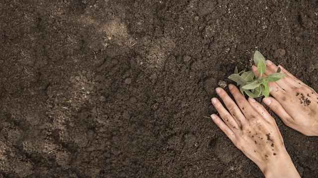 Image: Freepik.com | Fertilizers_Market_Trends_Analysis_Forecast_2020_2025